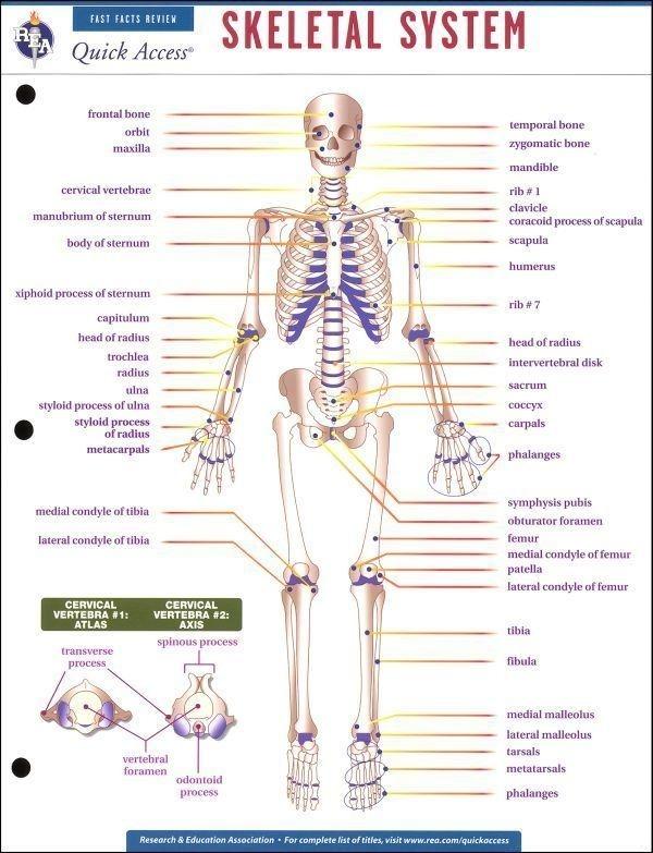 Body System Worksheets For Middle School - Worksheets Master