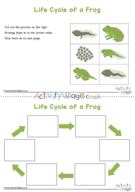 Frog Life Cycle Sequencing Worksheet