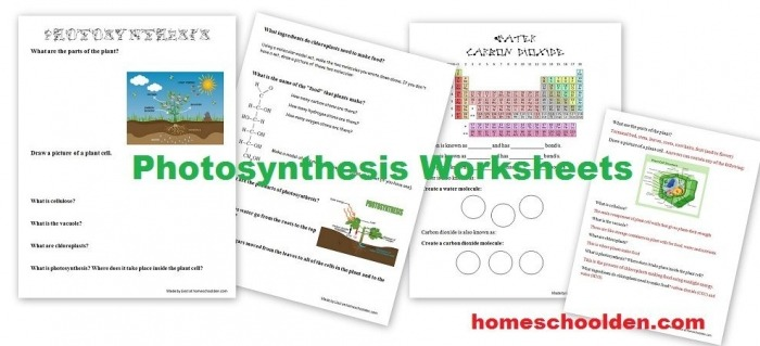 Help Your Students Understand The Basic Process Of Photosynthesis