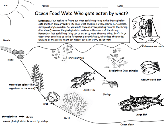 Heres A Lesson And Materials On A Marine Food Web