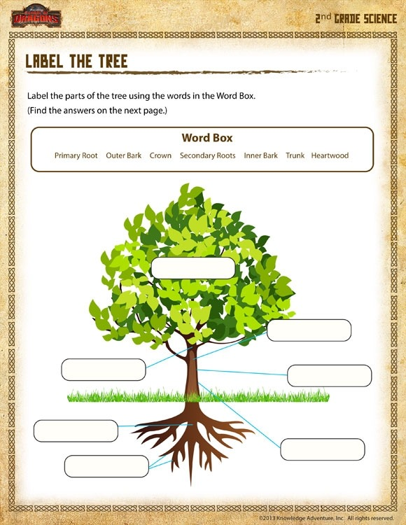 Label The Tree View Science Worksheet For Nd Grade Sod Free