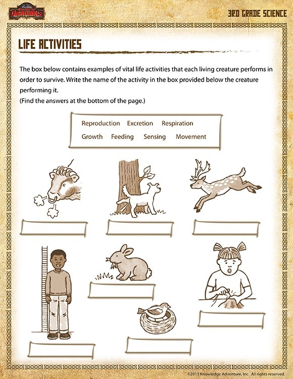 Life Activities View Printable Science Worksheet For Rd Grade