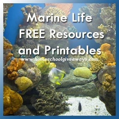 Marine Life Themed Free Resources And Printables