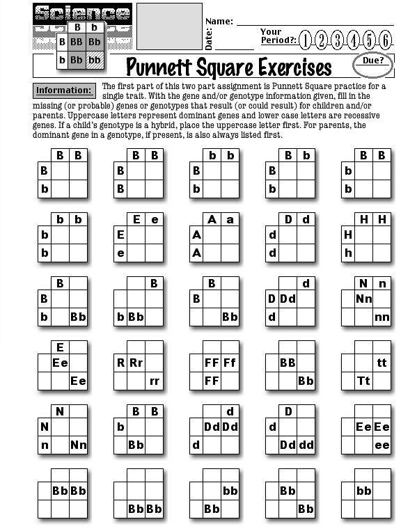 Punnett Square Practice Worksheets In