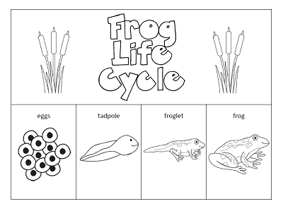 The Paper Maid Frog Life Cycle