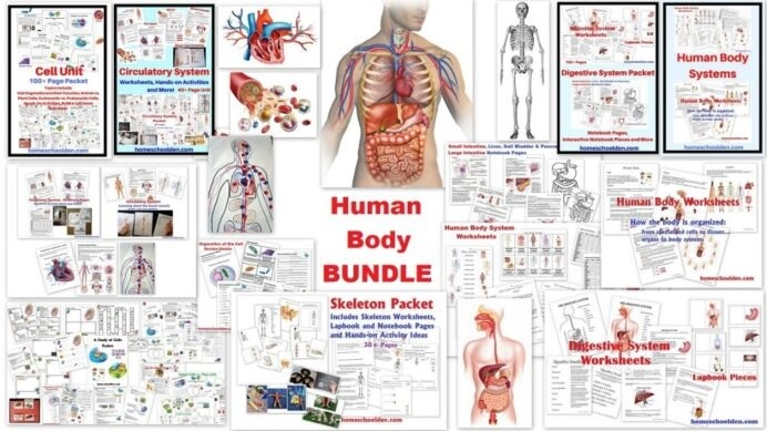 Website That Can Solve Any Math Problem Human Body Systems