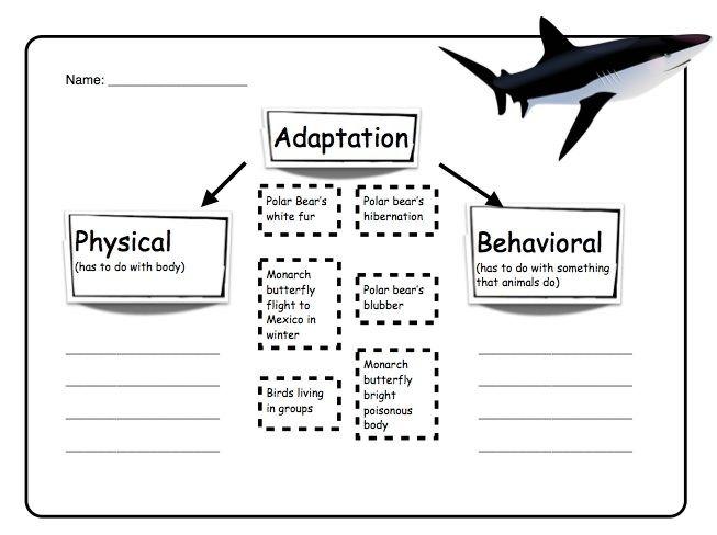 Animal Adaptations Worksheets Worksheets Math Art And Craft