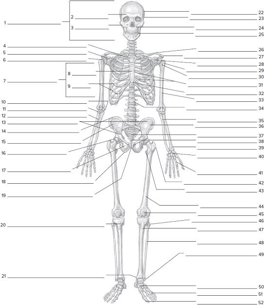 Anterior Skeletal Worksheeton The Anterior Skeletal Wor