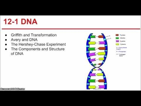 Ch  Dna And Rna Part