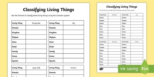Classifying Living Things Worksheet Teacher Made Science