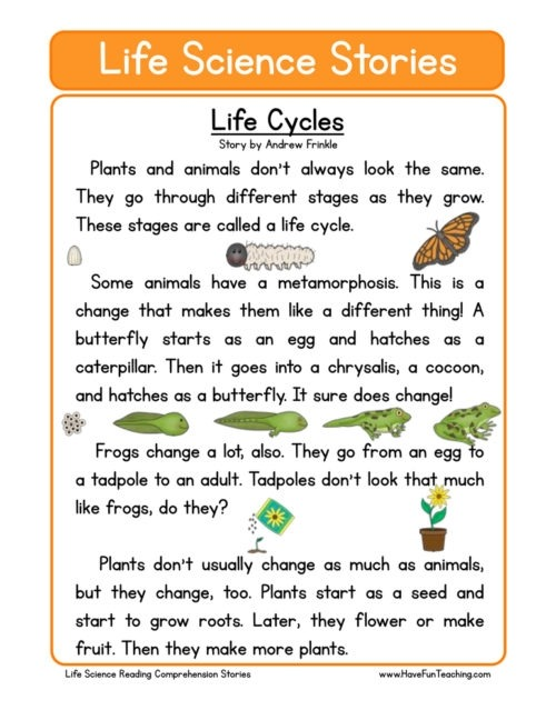 Plants Worksheets Have Fun Teaching Plant For Rd Grade Life