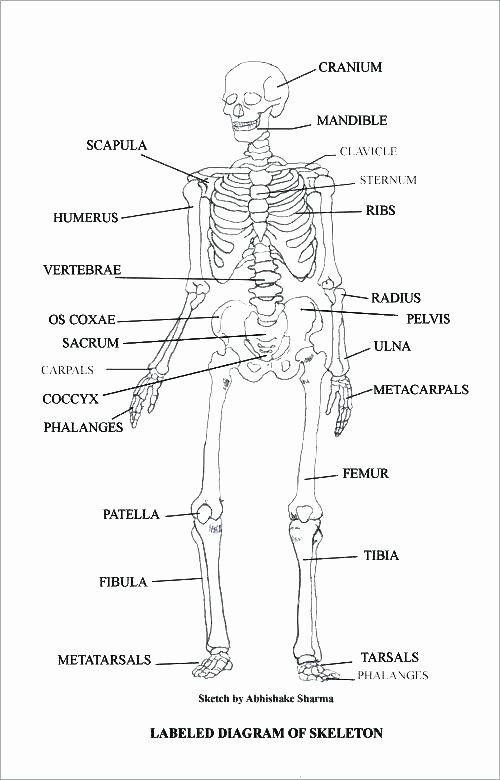 Printable Anatomy Labeling Worksheets
