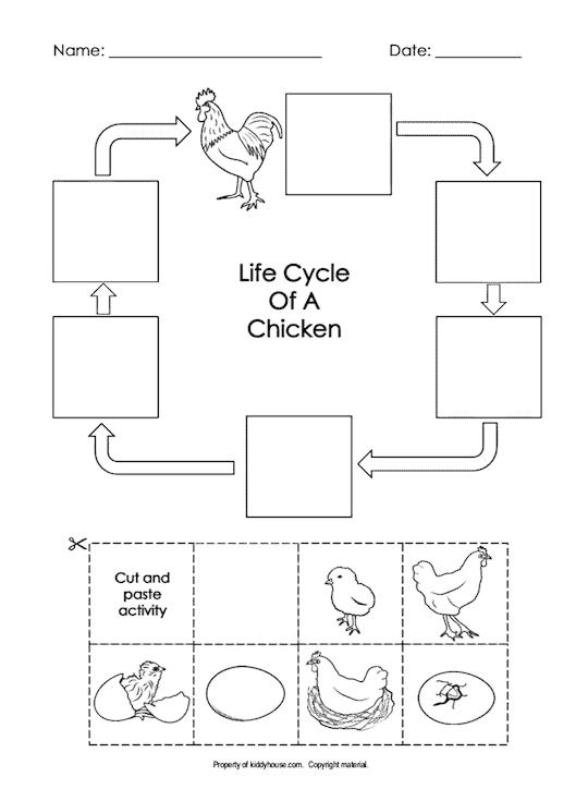 Chicken Worksheets
