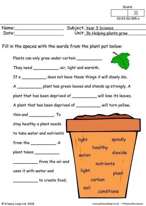 How Do Plants Grow Worksheet