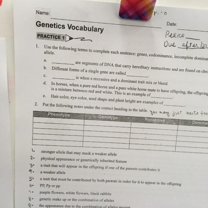 Miss Durant Science Life Genetics Vocabulary Cpo Skill And