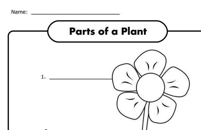 Parts Of A Plant Worksheet For K Free