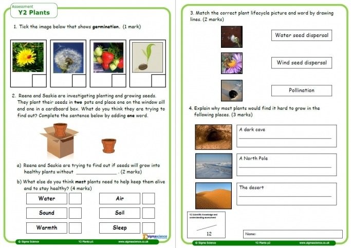 Plants Worksheet For Year Science Teachwire Teaching Resource