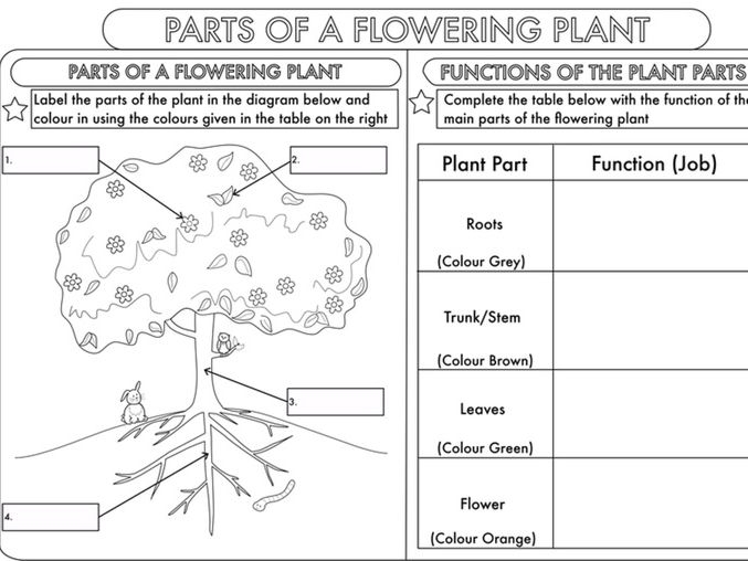 Year  Science Parts Of A Plant Worksheet
