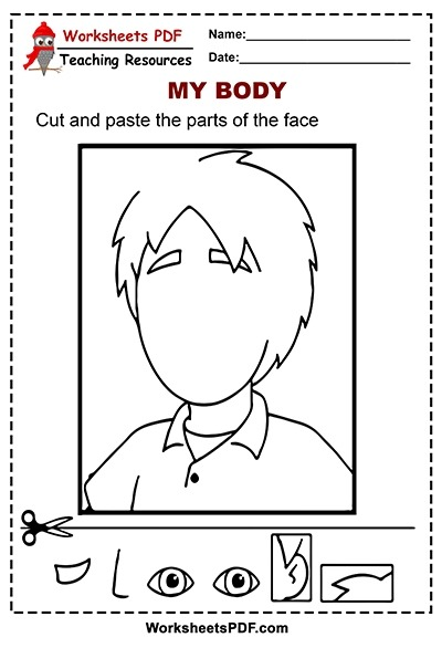 Cut And Paste The Parts Of The Face