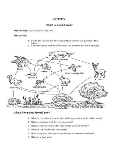 Food Web Worksheet Activity  Answers