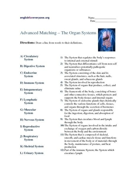 Human Body Systems Matching Worksheet Answers Worksheets