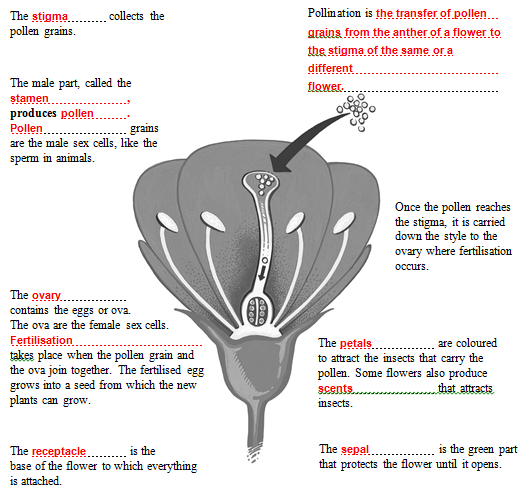 Parts Of A Flower Worksheet For High School