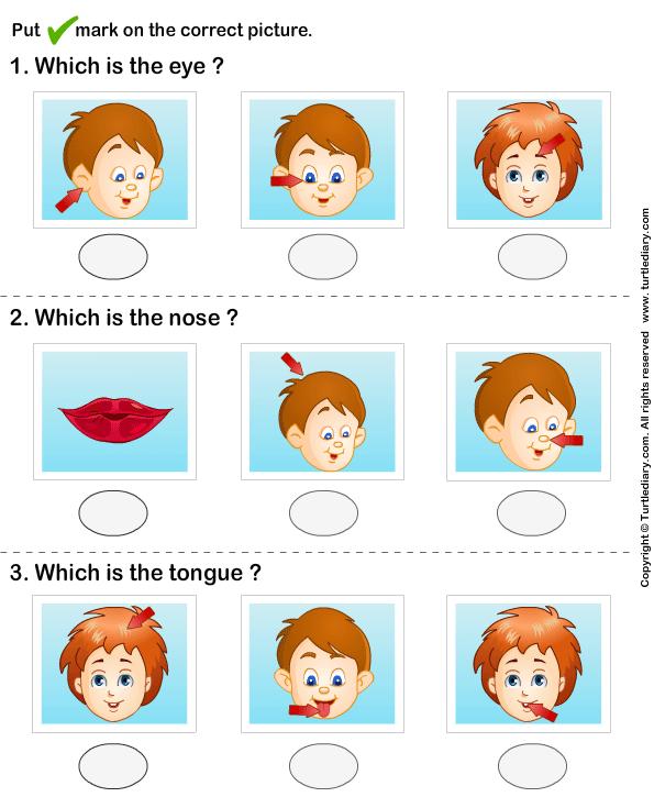 Parts Of Human Face Worksheet
