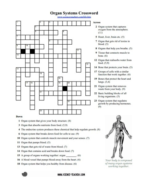 Systems Crossword Puzzle Worksheet For Th Th Grade Body