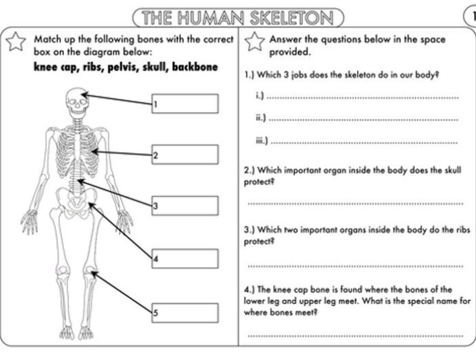Year And Science Worksheets With Complimentary Posters Math Tricks