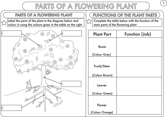 Year Science Parts Of Plant Worksheet Teaching Resources