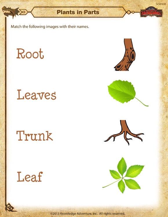 Plants In Parts Worksheet  Kindergarten Science Printable  Sod