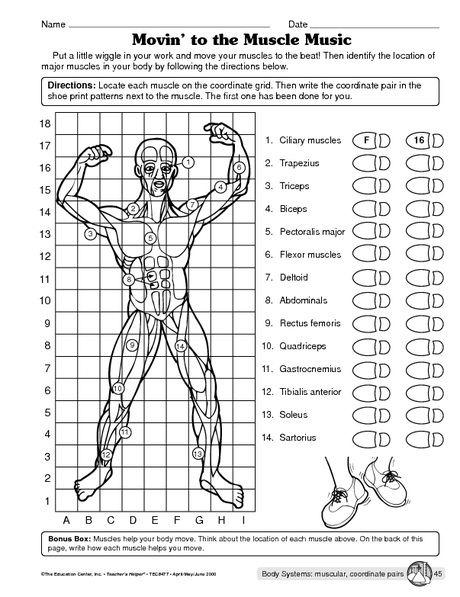 Science Worksheet Muscular System