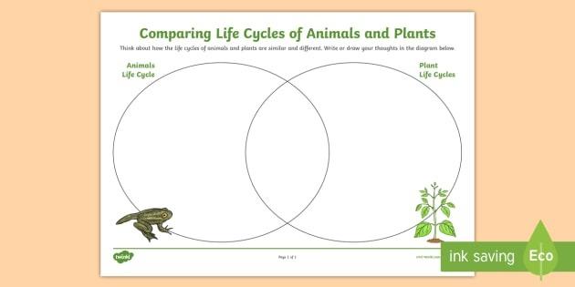 Comparing Plant And Animals Life Cycles Venn Diagram Worksheet