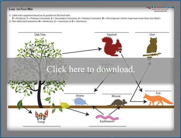 Food Chain Worksheets For High School