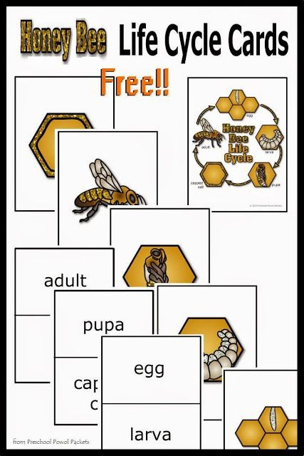 Free Honey Bee Life Cycle Cards