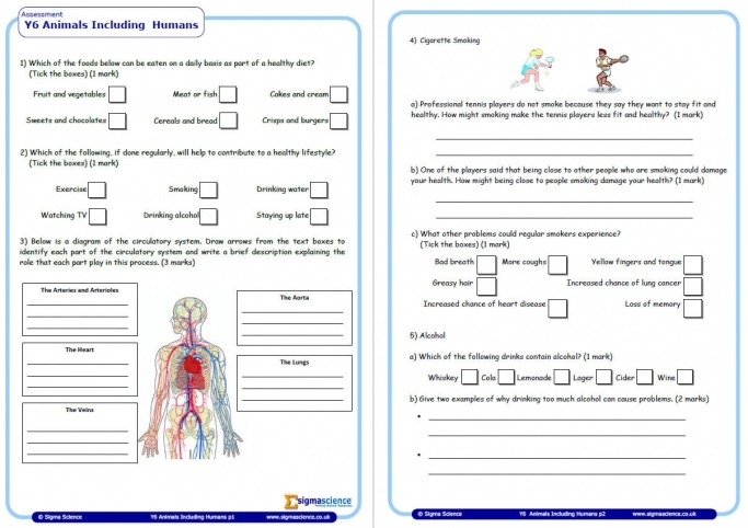 Human Biology Worksheets Free Printable Counting Coins Coloring