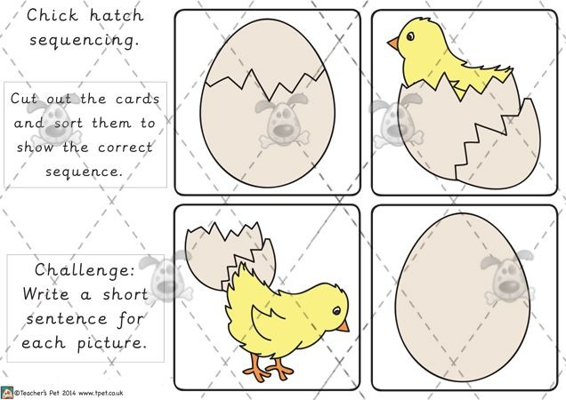 Image Result For Hatching Egg Activities