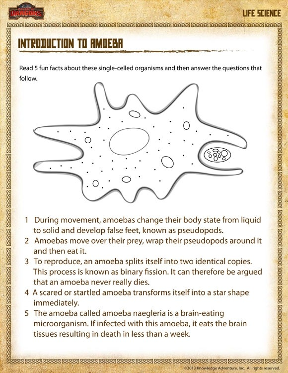 Introduction To Amoeba View  Science Worksheet Grade   Sod