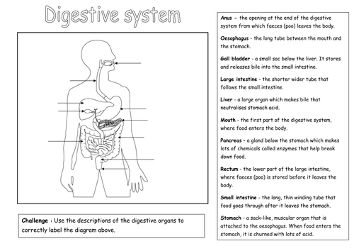 Label The Digestive System