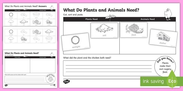 Plants And Animals Needs Worksheet Teacher Made